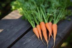 Vers gewassen gehele wortelen op oude houten lijst royalty-vrije stock foto