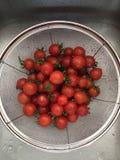 Vers Gewassen Tomaten Royalty-vrije Stock Afbeeldingen