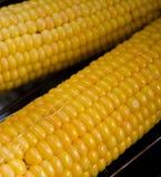 Vers graan op maïskolven bij de grill, close-up Royalty-vrije Stock Afbeeldingen