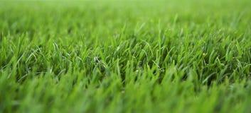 Vers gras Stock Afbeeldingen
