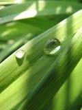 Vers gras en twee dalingen en zon Stock Afbeeldingen