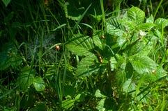 Vers gras met dauwdalingen Dauwdalingen op spinneweb op groen gras royalty-vrije stock afbeeldingen