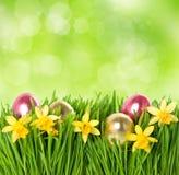Vers gras met narcissenbloemen, paaseieren Stock Foto