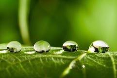 Vers groen blad royalty-vrije stock foto's