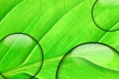 Vers groen blad met waterdruppeltje Stock Foto