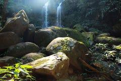 Vers groen bos stock foto
