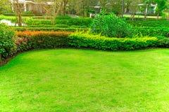 Vers groen Burmuda-gras vlot gazon als tapijt met kromme binnen vorm van struik, bomen op de achtergrond, goede mainternance lans royalty-vrije stock foto's