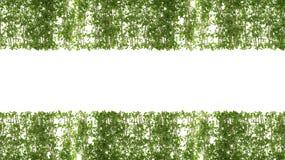Vers Groen geïsoleerd bladkader Stock Foto's