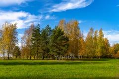 Vers groen gebied met de herfstbomen royalty-vrije stock fotografie