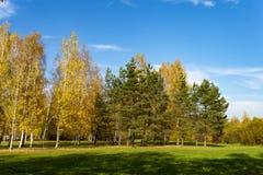 Vers groen gebied met de herfstbomen stock foto
