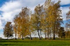 Vers groen gebied met de herfstbomen stock afbeelding
