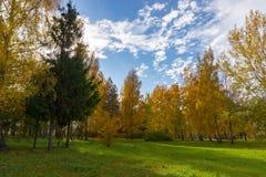 Vers groen gebied met de herfstbomen stock fotografie