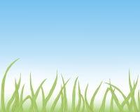 vers groen gras Stock Foto