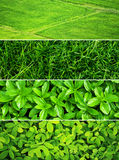 Vers groen gras Stock Afbeelding