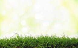 Vers groen gras Royalty-vrije Stock Afbeeldingen