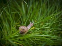Vers groen gras Stock Fotografie