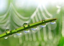 Vers groen gras met de close-up van dauwdalingen Stock Afbeelding