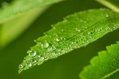 Vers groen gras met de close-up van waterdalingen stock afbeelding