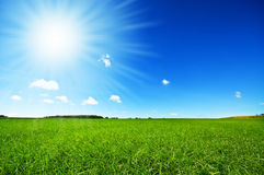 Vers groen gras met heldere blauwe hemel Royalty-vrije Stock Foto's