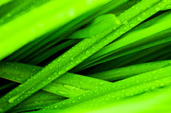 Vers groen gras met waterdalingen Royalty-vrije Stock Afbeeldingen