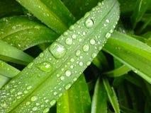 Vers groen gras met waterdalingen Royalty-vrije Stock Foto's