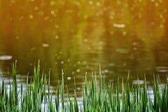 Vers groen gras op meer Stock Afbeeldingen