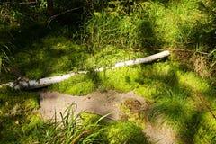 Vers groen mos Stock Fotografie