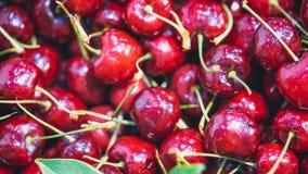 Vers Heerlijk Rood Cherry Fruit royalty-vrije stock afbeeldingen