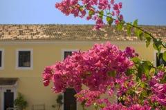 Vers helder roze tropisch bloemenclose-up op een tak met groene bladeren op een vage achtergrond van een geel huis met wit royalty-vrije stock afbeelding