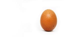 Vers kippenei op witte achtergrond Geïsoleerds bruin ei Stock Fotografie
