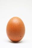 Vers kippenei op witte achtergrond Geïsoleerds bruin ei Royalty-vrije Stock Fotografie