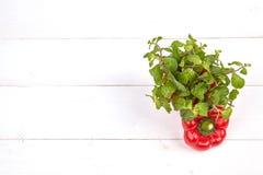 Vers kleurrijk groene paprikavakje op houten lijst Stock Foto's