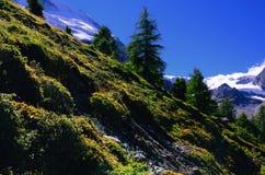 Vers le bas colline dans les Alpes suisses image stock