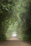 Vers le bas dans les bois Photo libre de droits