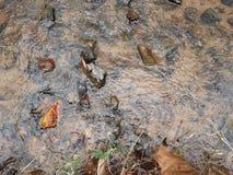 Vers le bas par le fleuve Photos stock
