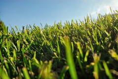 Vers le bas profondément dans les lames de l'herbe image libre de droits