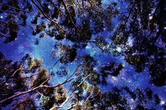Vers le ciel au ciel nocturne Photo stock