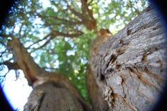 Vers le haut de dans les arbres Photos stock