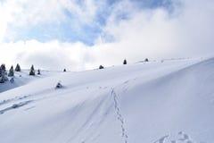 Vers le haut de en des montagnes de CiucaÅŸ Images libres de droits