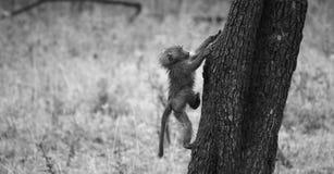 Vers le haut de l'arbre Photo stock