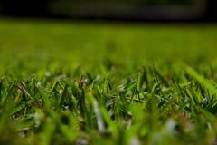 Vers le haut de la vue étroite de la pelouse verte photographie stock libre de droits