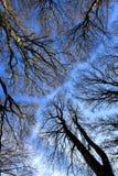 Vers le haut de la vue dans la forêt Images libres de droits