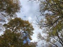 Vers le haut de la vue sur des arbres, ciel nuageux bleu-gris Forêt, nature Images stock