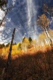 Vers le haut des couleurs à un ciel strié Photographie stock libre de droits
