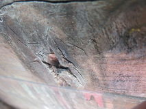 Vers le haut du tir étroit du bois perforé bosselé Photo libre de droits