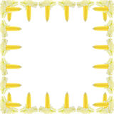 vers maïskolvenkader Royalty-vrije Stock Afbeeldingen