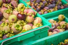 Vers mangostanfruit na oogst Stock Foto's