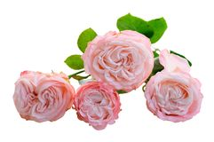 Vers nam bloemen toe royalty-vrije stock afbeelding