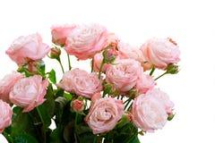 Vers nam bloemen toe royalty-vrije stock foto