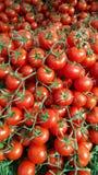 Vers organisch Cherry Tomato op Markt stock afbeeldingen